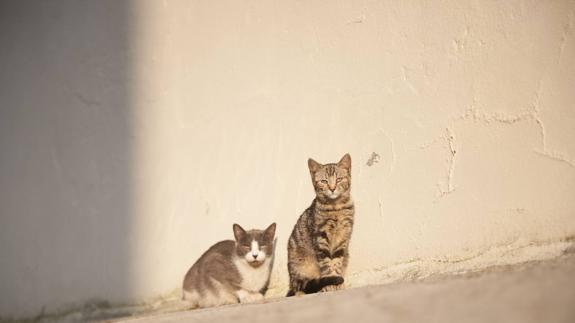 Control de las colonias felinas por el método CES