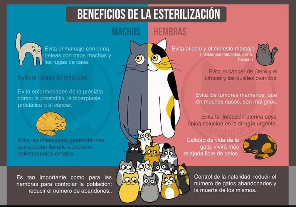 Beneficios de la esterilización