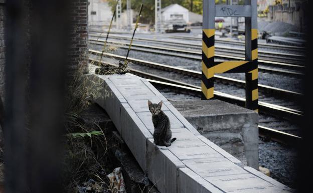 Los gatos de la Estación del Norte de Valladolid