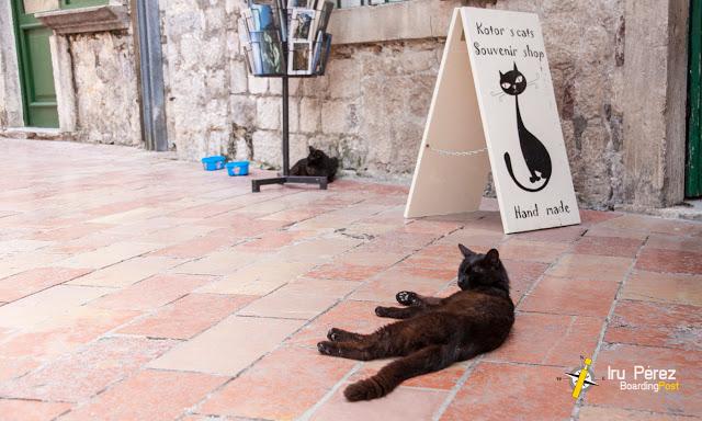 Los gatos de Kotor
