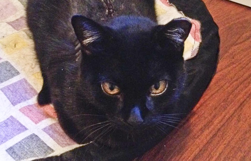 Zorra, una gatita con suerte
